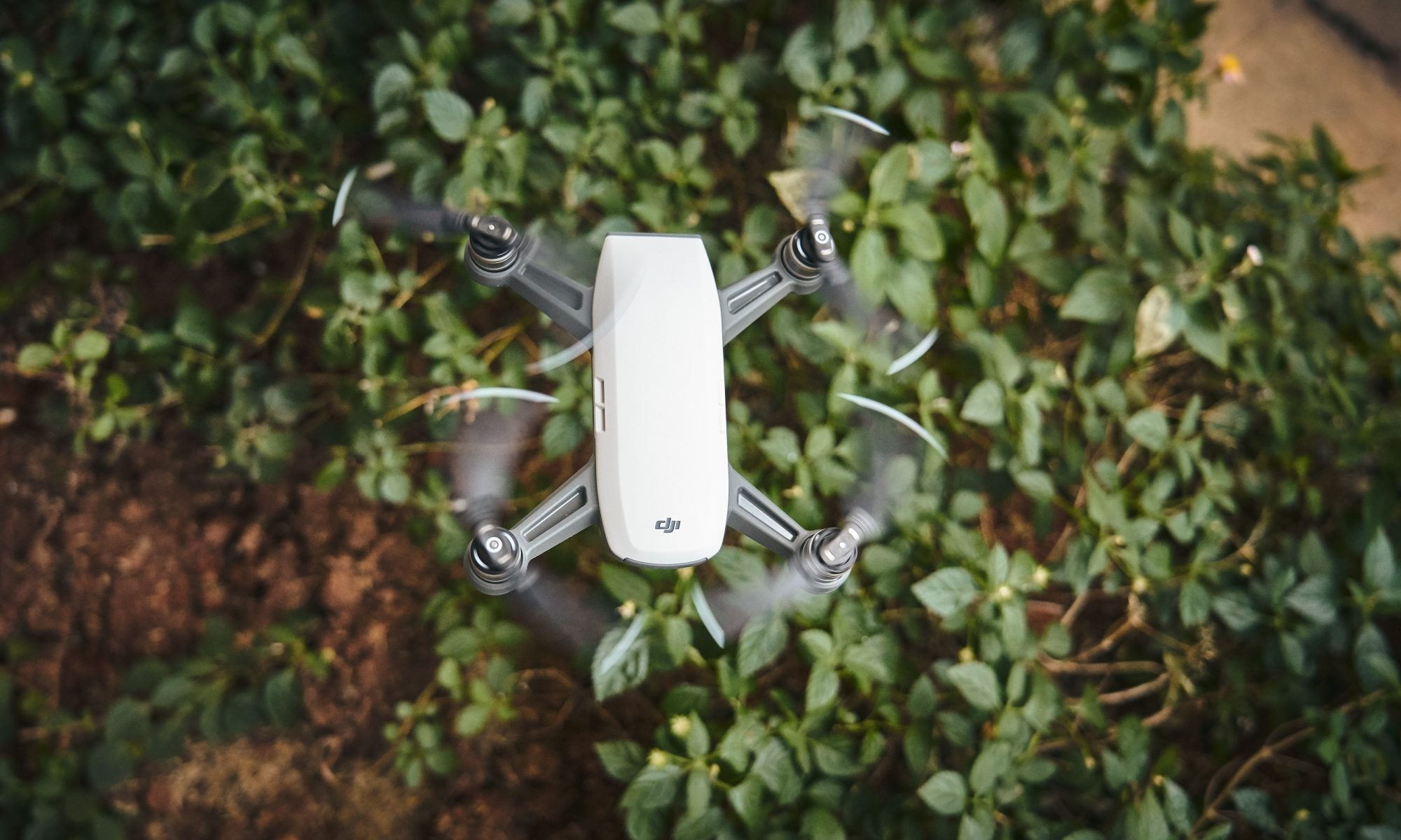 Image: A top view of some plants on the ground, above them a drone.