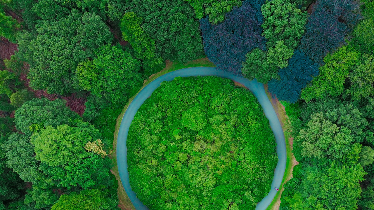 Image: An aerial shot from above of thick leafed treetops, a circular track of road in the middle of the woods, two people walking on the right bend of the road.