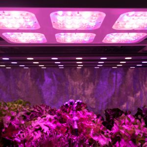 Smart indoor farm and Photoperiodism concept. Selective focus on sprinkler water head and Artificial LED panel light source used in an experiment on vegetables plant growth